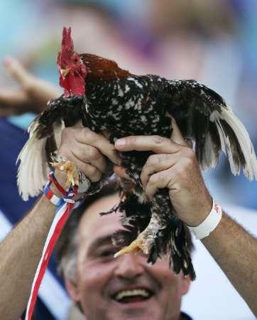 图文:法国vs中国体育展示斗鸡-搜狐排球世俱杯球迷韩国图片