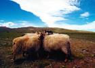 青藏铁路图片幻灯-藏区风情