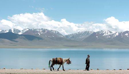 图文:一名藏民拉着马匹经过纳木错湖