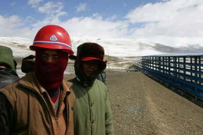 探访青藏铁路系列二 唐古拉山上的神圣守护者们