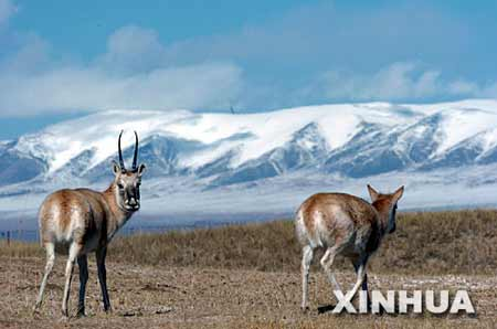国家旅游局长称使青藏铁路成我国旅游经典线路