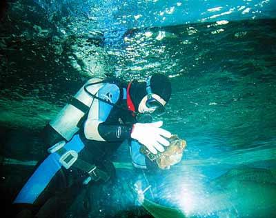深圳海洋世界大鲨鱼下蛋 潜水员捡拾到六个(图)