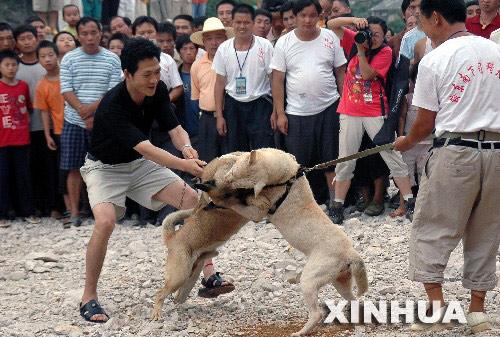 贵州举行下司猎犬展示 与德国牧羊犬齐名(图)