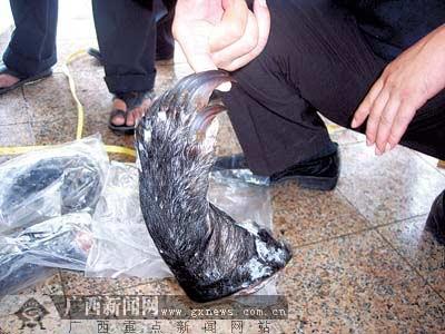 广西破获特大走私野生动物案 缴得穿山甲853只