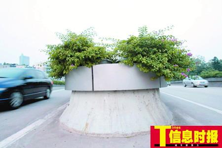 广州人大代表叫停高架桥绿化 因易引发事故(图)
