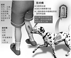 人类疾病半数来自动物 流浪宠物更得小心