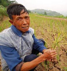 预计王大爷家今年_今年水稻的产量比去年增产二成五王大爷家今年收水稻多少千克?