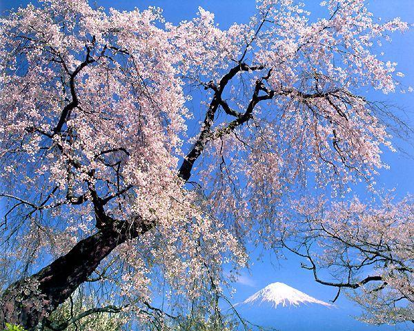 http://photocdn.sohu.com/20060906/Img245187128.jpg