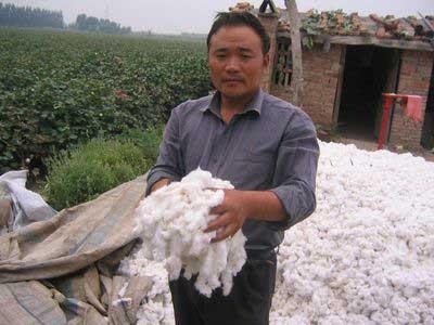 异地种棉遭恶势力侵犯 河南农民跪求保收成(图)