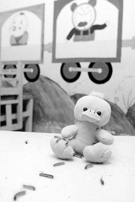 天津幼儿园被毛毛虫入侵 孩子不敢外出被迫停课