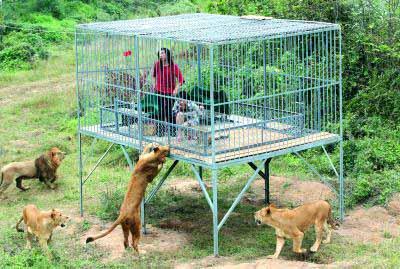 诗人进铁笼体验动物被拘感受 吃掉1斤生肉(图)