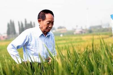 袁隆平东方魔稻越过三道难关 称后继者要象农民