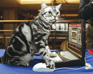猫捉 老鼠