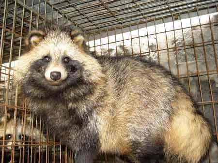 猜图几种动物_我国成为世界上最大的珍贵毛皮动物饲养国(图)-搜狐新闻