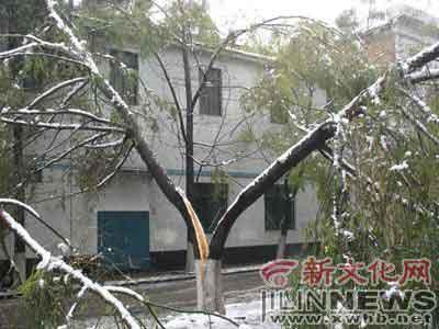 吉林敦化大雪压垮绿化树 损失百万元以上(图)