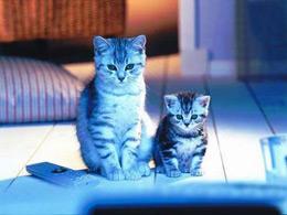 是真是假:想生女孩就绝不能碰猫?