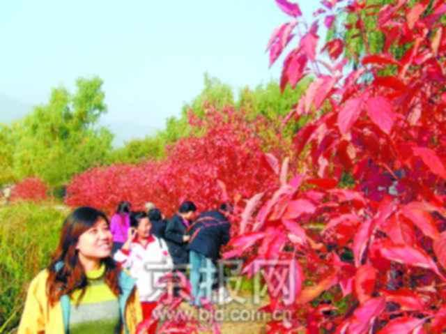 本报讯 (记者龙露)今天上午,记者从北京植物园获悉:植物园内200多种色彩斑斓的彩叶,成为金秋观叶的好场所。   北京植物园内共有可观赏的彩叶树种、变叶树种200余种(含品种),仅红叶就有50余种(含品种)。据悉,这里的红叶树种在北京是最多的。近年来植物园实施了彩化工程,更使植物园成为了北京地区彩叶植物最多的公园。J029