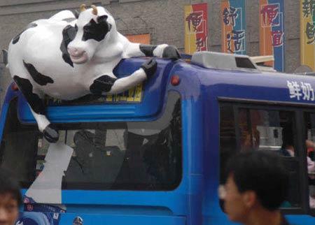 卡通奶牛爬上公交做乳饮料广告 交警称违规(图)