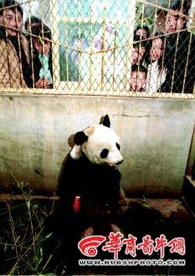 西安秦岭野生动物园 唯一的大熊猫去了(组图)-搜狐