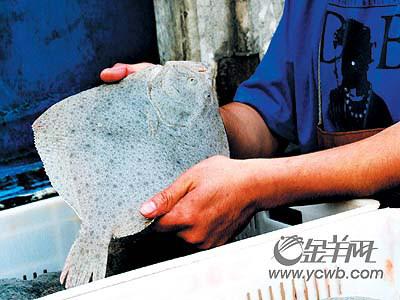 广州全市停售多宝鱼