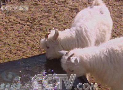 央视《焦点访谈》:走进鄂尔多斯