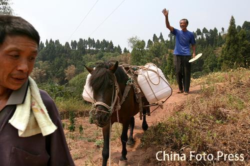 重庆百年大旱 马帮高坡送水解急难(6张)
