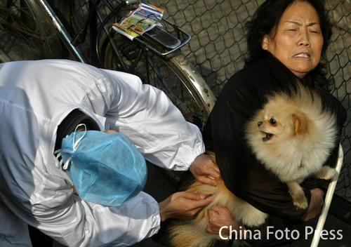 宠物犬年审 注射疫苗(1张)