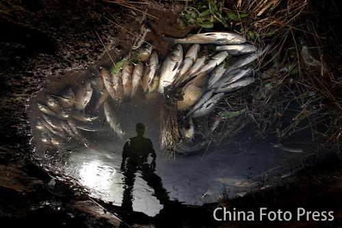 鱼塘发生大面积活鱼死亡(1张)