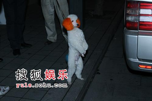 独家:不与胡军同场?梁朝伟缺席刘嘉玲生日会