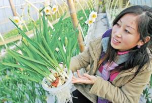 舟山 水仙种在玻璃瓶里图片