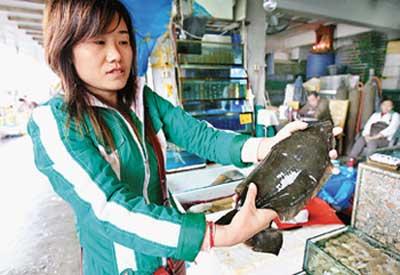 多宝鱼重返广州市场 价格上涨三成多户酒楼预订