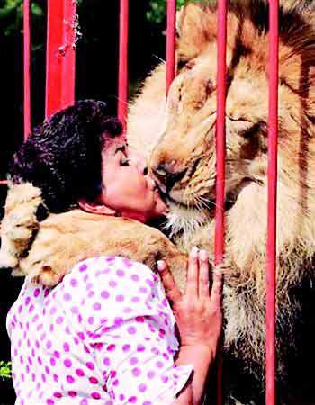 非洲雄狮与哥伦比亚妇女上演人狮情未了