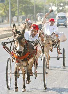 巴基斯坦卡拉奇发展城市运动 开展赛驴车(图)