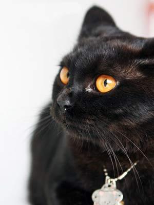 猫咪测你的嗨咻能力指数-搜狐星座