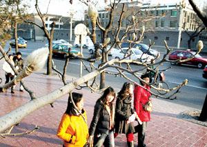 北京最高气温达8摄氏度 玉兰花冒出骨朵