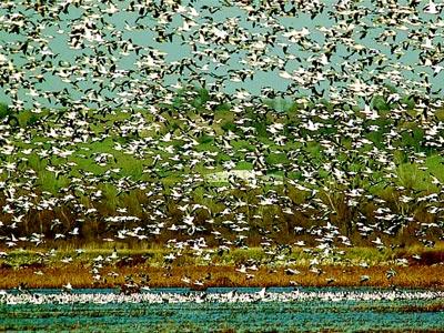 等现代设施成为鸟儿迁徙途中一个又一个陷阱-揭开大连成群飞鸟自杀