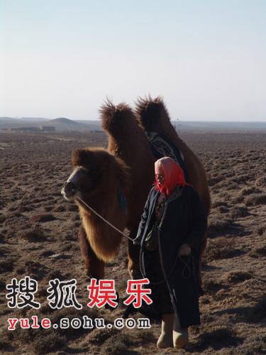 图雅的婚事 最新剧照曝光 7