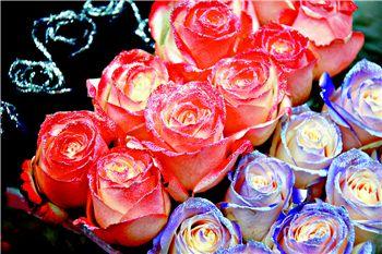 在莱太花卉,记者看到玫瑰花的身价又到了暴涨时节,平时0.