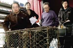 蔡猛/小动物保护协会副会长、主持人蔡猛看着猫贩运猫的铁笼脸色凝重...