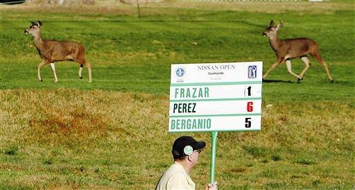 图文:2007尼桑高尔夫公开赛 球场上的小鹿散步