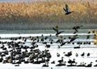 候鸟数量种类均明显减少