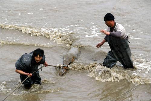 长航上海警方在长江口打捞出一颗巨型航空炸弹