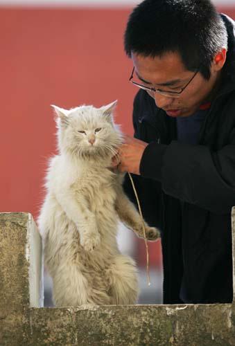 昆明又发虐猫事件 记者解救被虐小猫