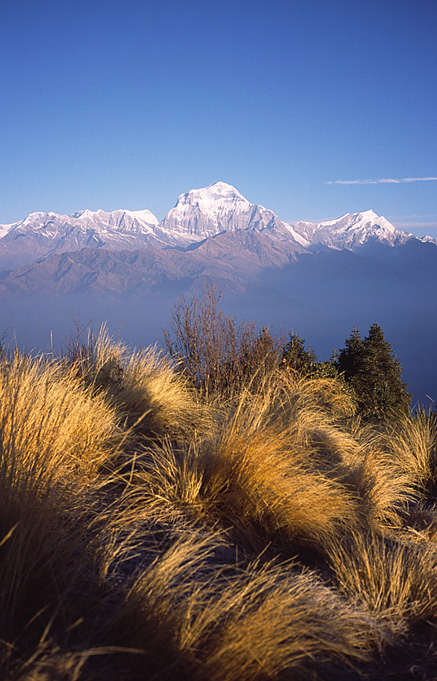 清晨的Dhaulagiri Himal群山