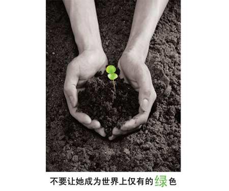 不要让她成为世界上仅有的绿色 作者:丁一