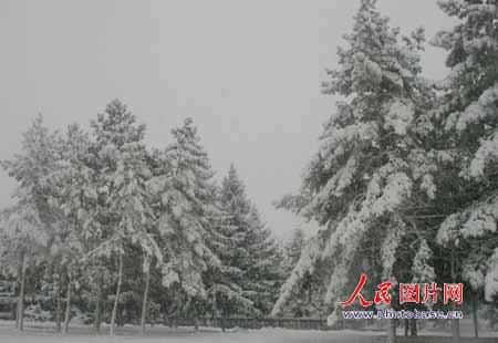 黑龙江齐齐哈尔遭大雪侵袭 降雪量15厘米(组图)