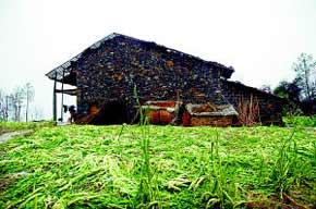 开县受冰雹袭击后的农舍和油菜地。
