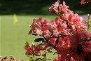 图文:[高尔夫]07大师赛热身 球洞边鲜花盛开