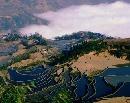 哀牢山中的梯田与云雾(六)