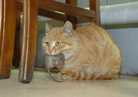 猫:宝贝儿,外面危险,咱回家去。(设计台词)